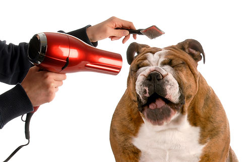 Tips-On-Starting-A-Dog-Grooming-Business