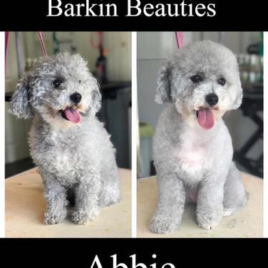 Barkin Beauties