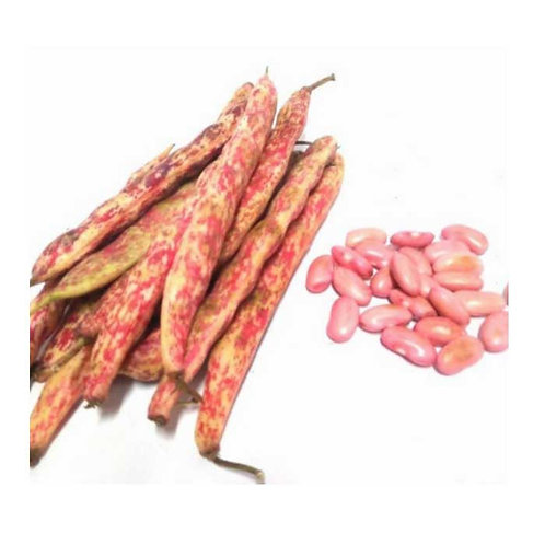 Kacang Merah cangkang Konvensional