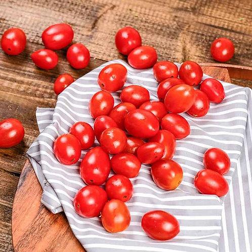 Tomat Ceri Bulat Organik