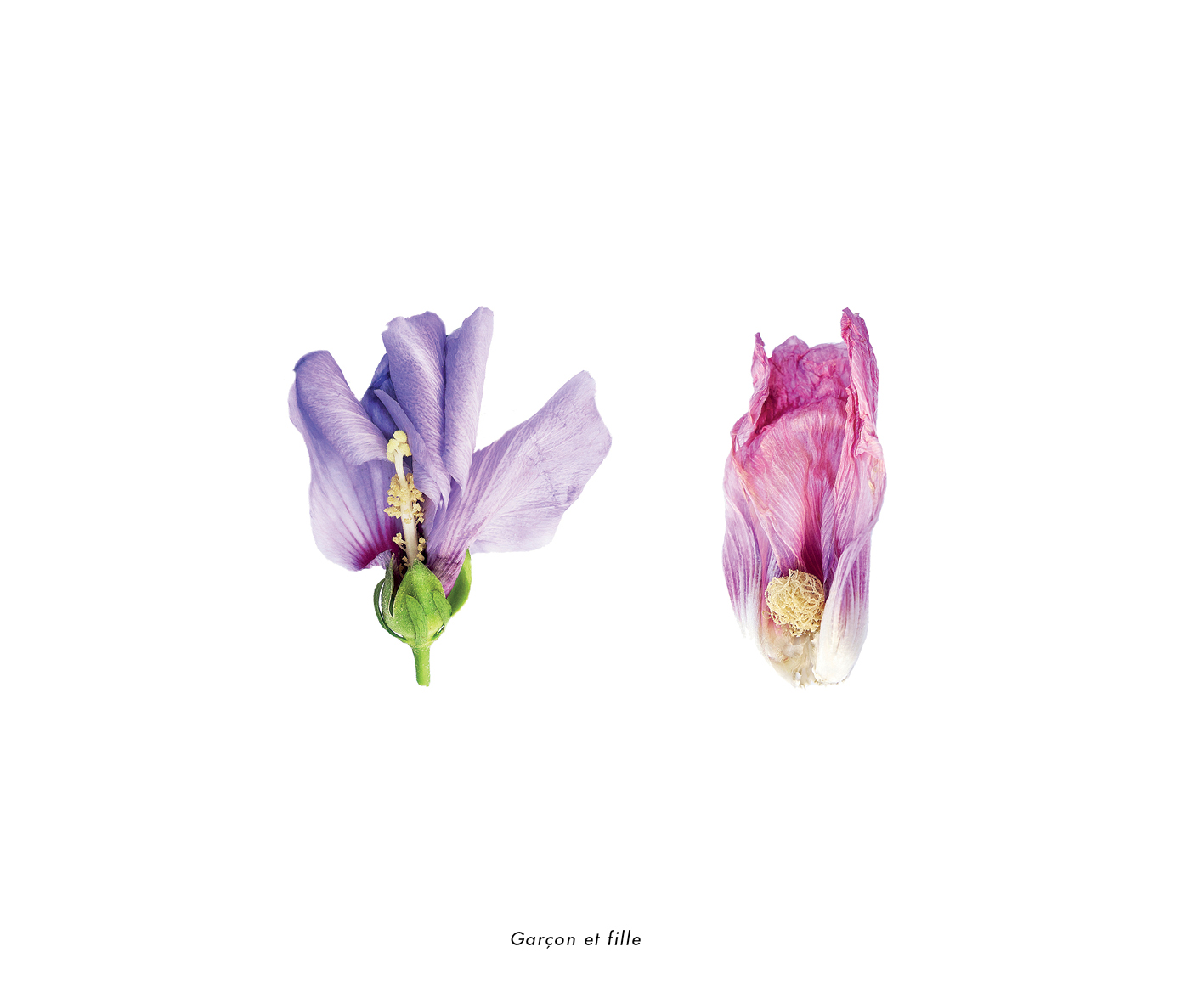 Fleurs et jardins imaginaires 26