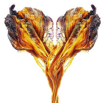 Iris ou l'ambiguïté