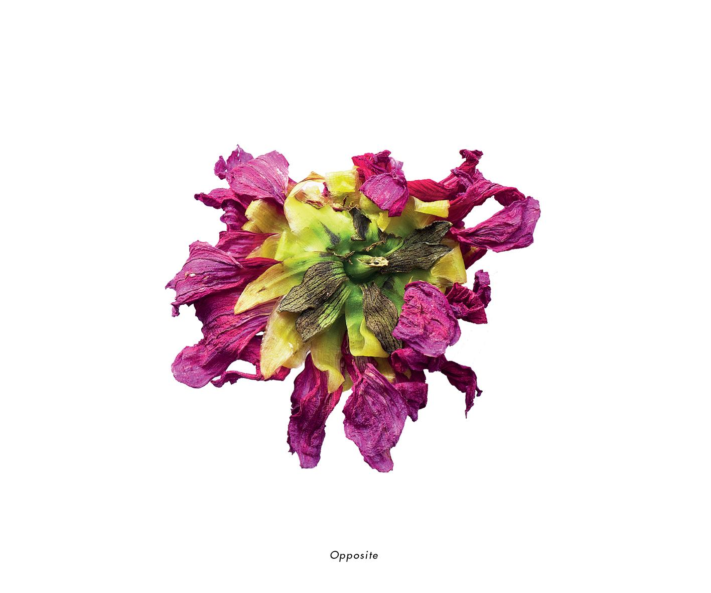 Fleurs et jardins imaginaires 30