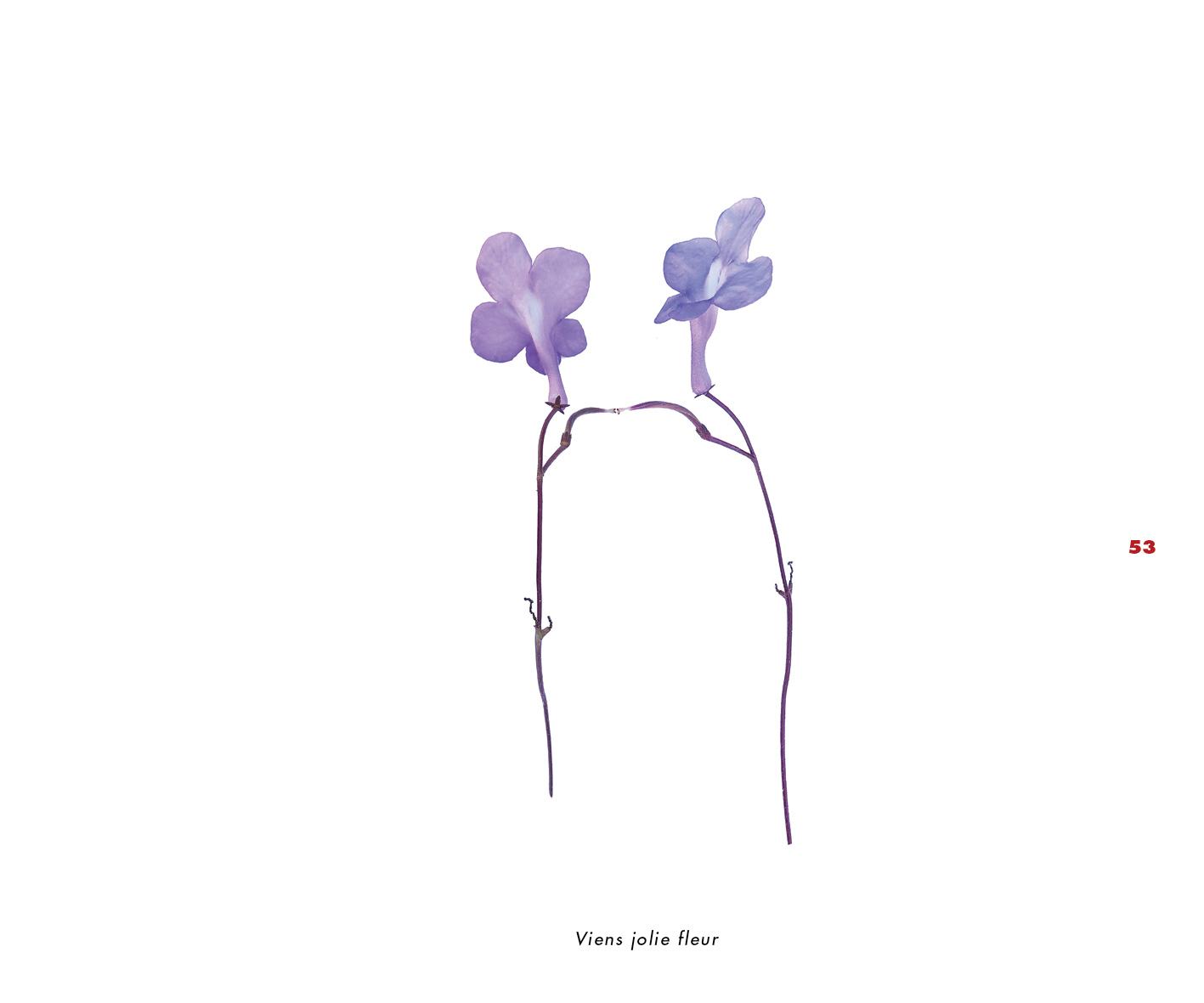 Fleurs et jardins imaginaires 53