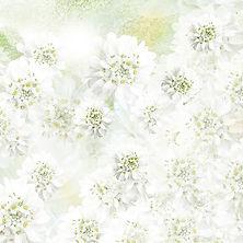Amour des fleurs blanches.jpg