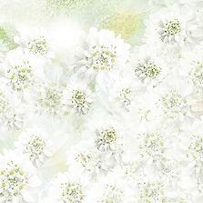 Amour des fleurs blanches 50 x 50 cm