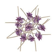 Iris,_fleur_bleuté_comme_un_clair_de_lu