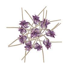 Iris: Fleur bleutée comme un clair de lune 5 x 50 cm