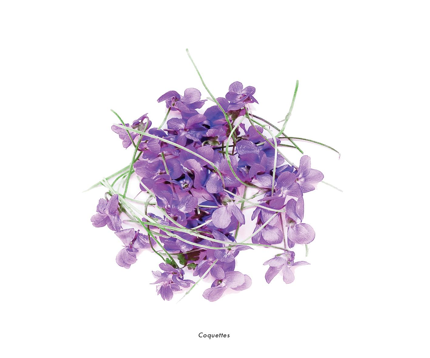 Fleurs et jardins imaginaires 52