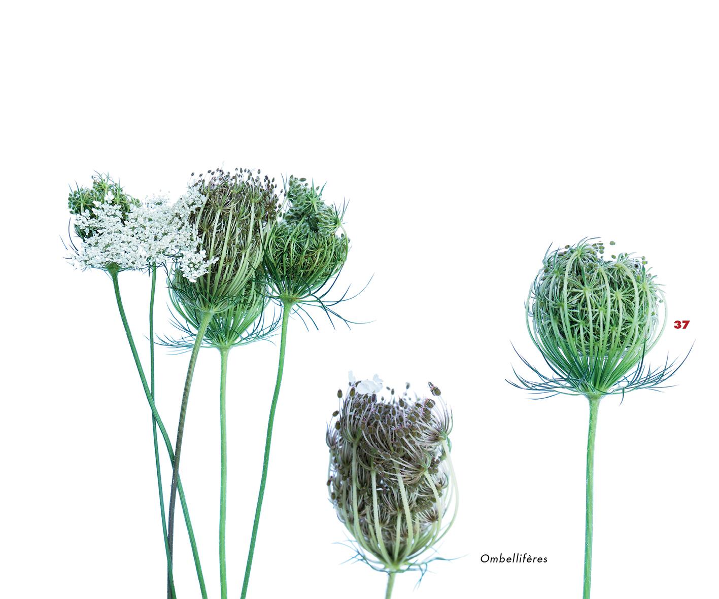 Fleurs et jardins imaginaires 37