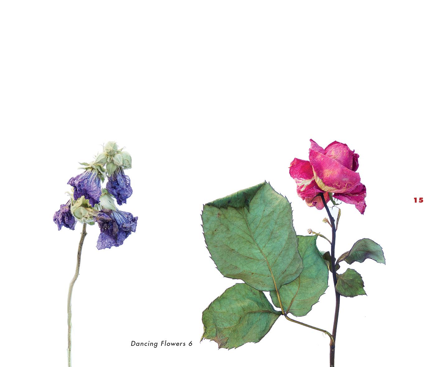 Fleurs et jardins imaginaires 15