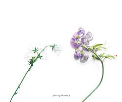 Fleurs et jardins imaginaires 13
