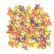 Trompeuses_Orchidées.jpg