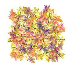 Trompeuses orchidées. Fleurs ou papillons ? 50 x 50 cm