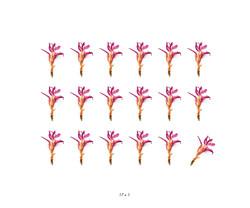 Fleurs et jardins imaginaires 8