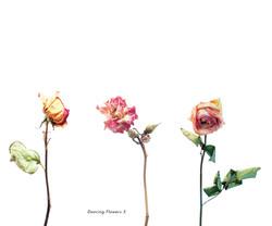 Fleurs et jardins imaginaires 14