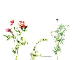 Fleurs et jardins imaginaires 12