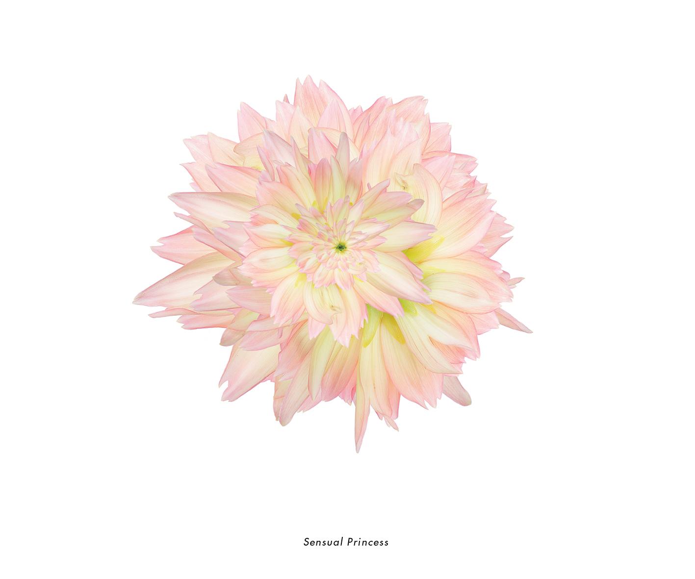 Fleurs et jardins imaginaires 58