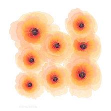 Coquelicot fleur solitaire et  fragile 50 x 50 cm