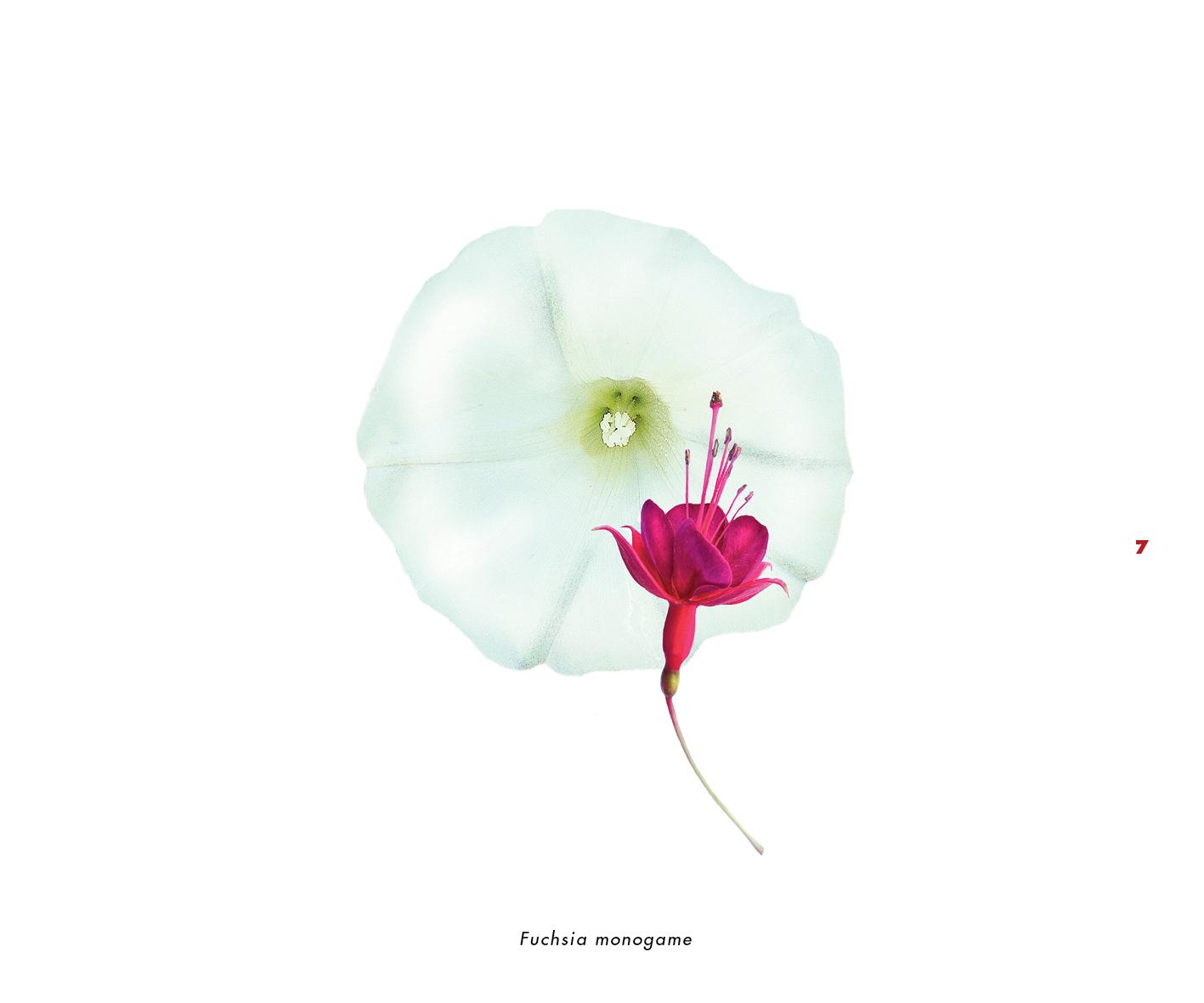 Fleurs et jardins imaginaires 7