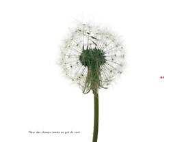 Fleurs et jardins imaginaires 41
