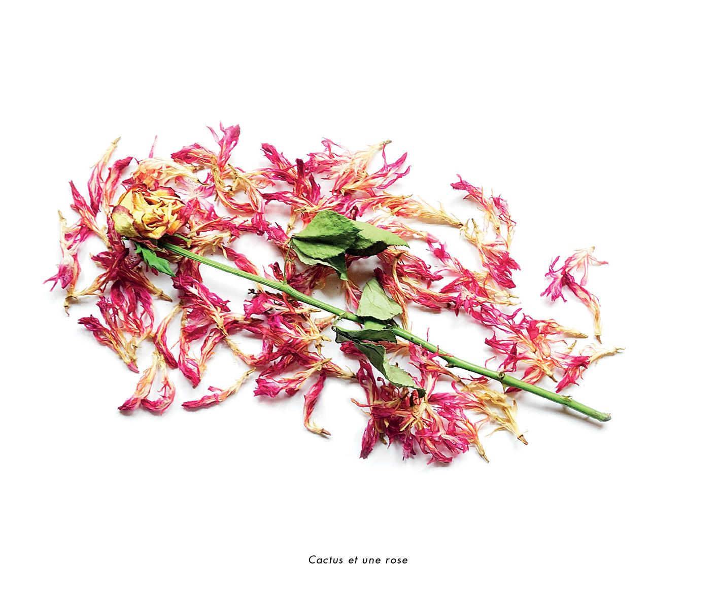 Fleurs et jardins imaginaires 18