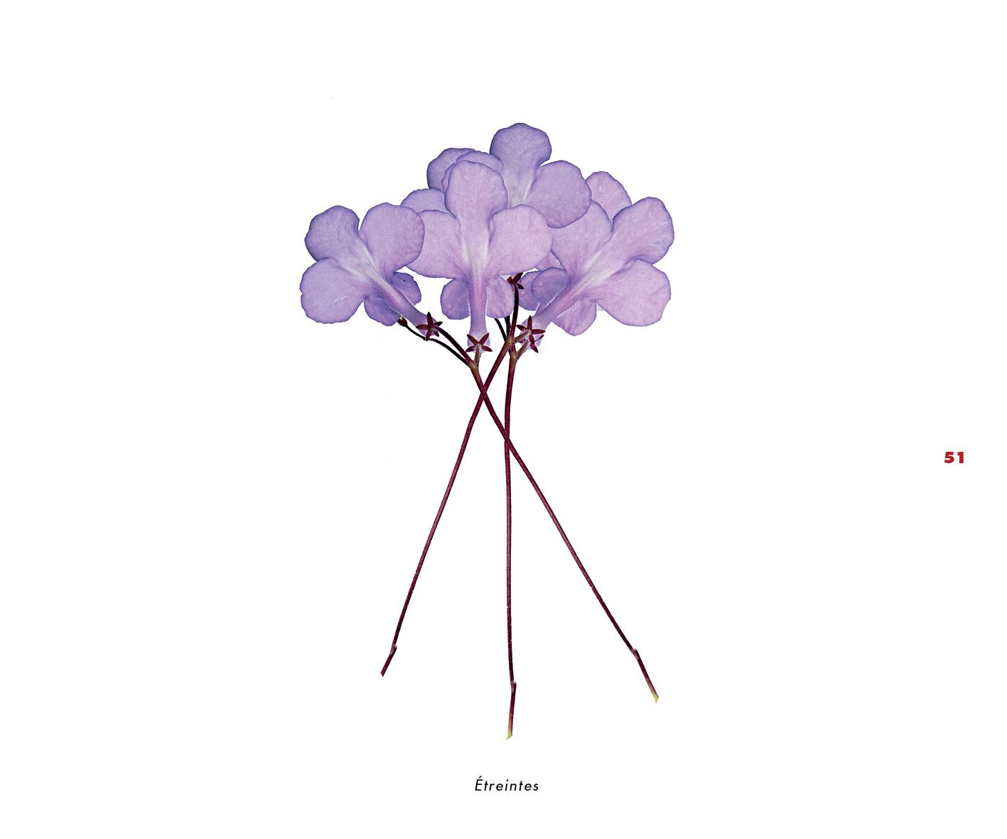 Fleurs et jardins imaginaires 51