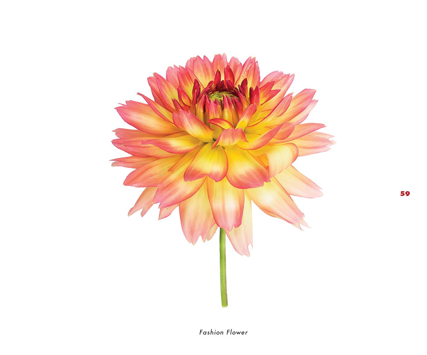 Fleurs et jardins imaginaires 59