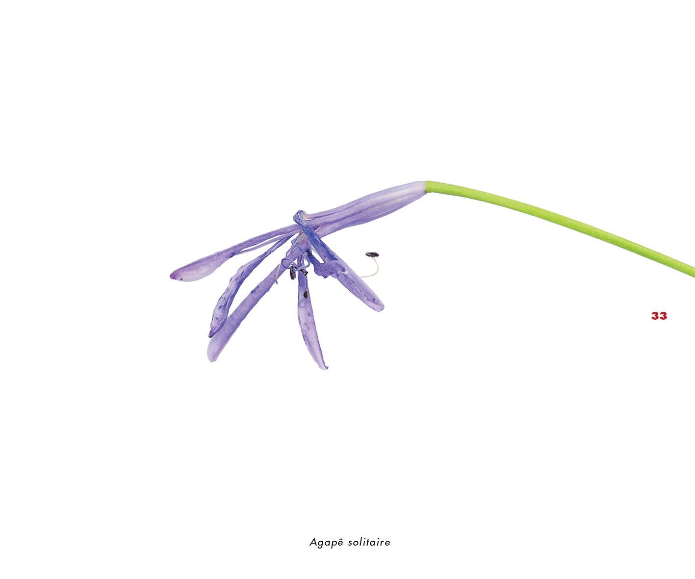 Fleurs et jardins imaginaires 33