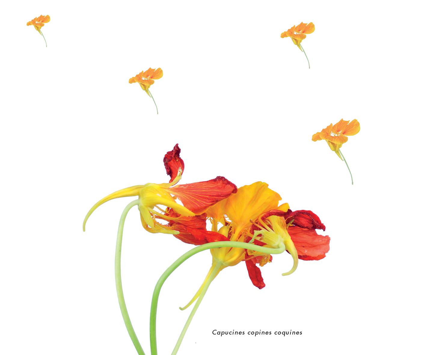 Fleurs et jardins imaginaires 24