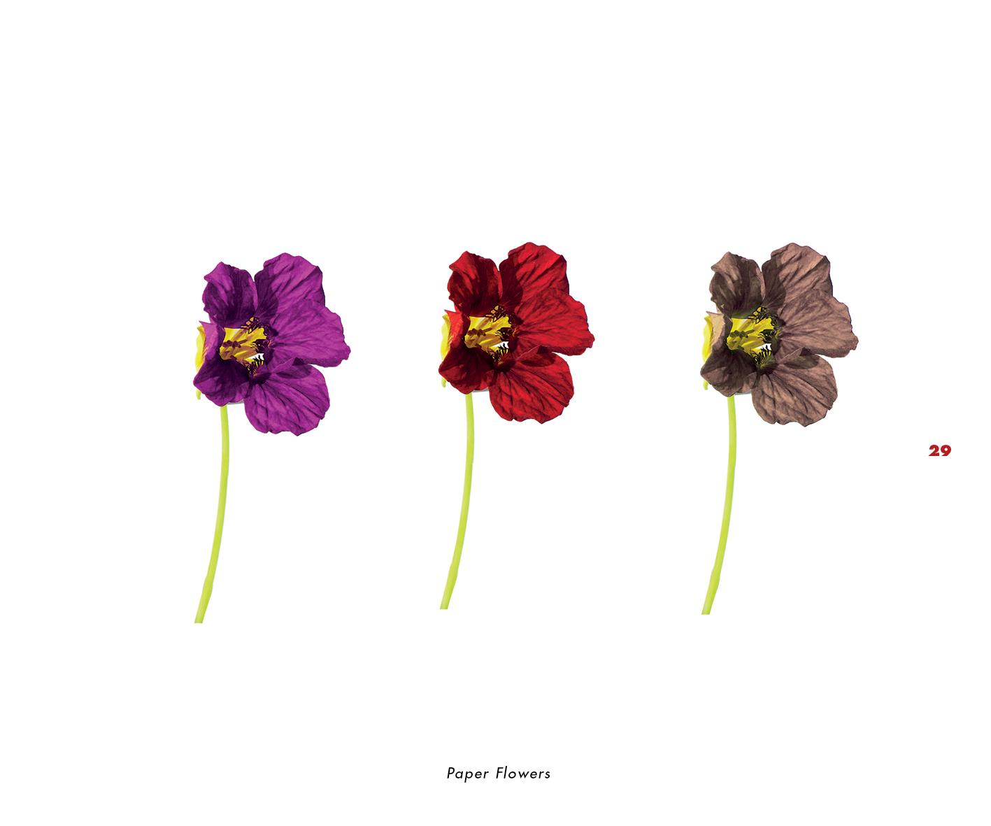 Fleurs et jardins imaginaires 29