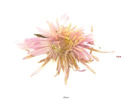 Fleurs et jardins imaginaires 113