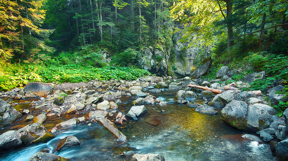 river-in-the-forest-beautiful-natural-la