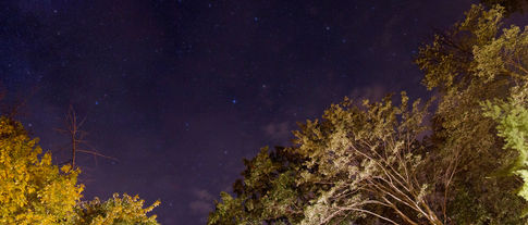 Starry night in the forest