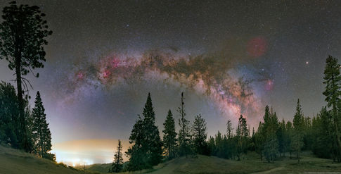 Night Sky among the Jeffery Pines