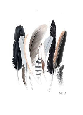 feathers:group.jpeg
