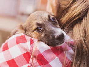 Are You Prepared To Adopt A Pet?