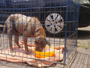 Covid has a huge impact for the Bali Dogs - Donate Today