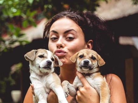 Unique Puppies Heaven in Bali Hotel