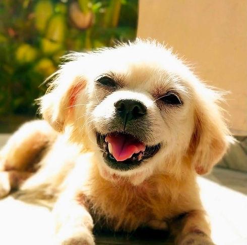 Gypsy Rescue Dog of Bali Dog Association