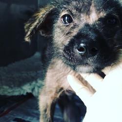 byron rescue bali dog association