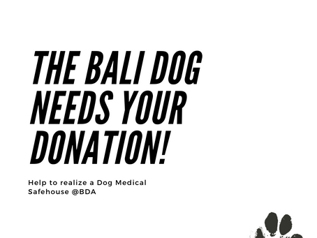 DONATE TODAY! Creating a Safe & Medical House for Balidogs in Need.