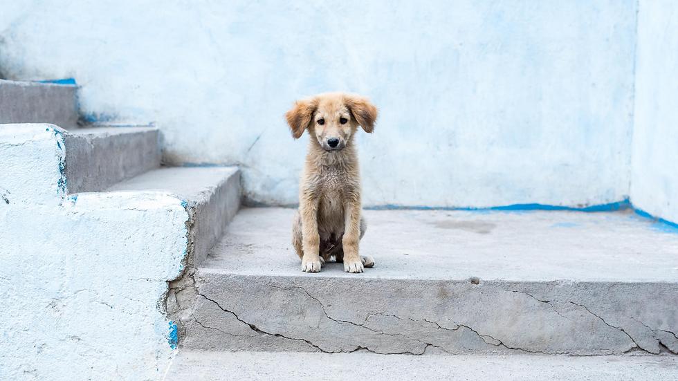 Bali Stray Dog  (1).png