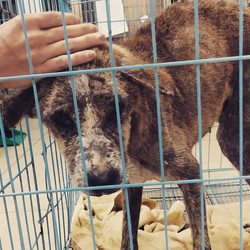 New rescue Rocky needs medical assistanc