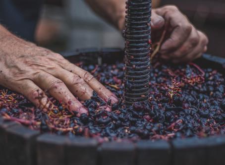 Enfin comprendre le vin nature