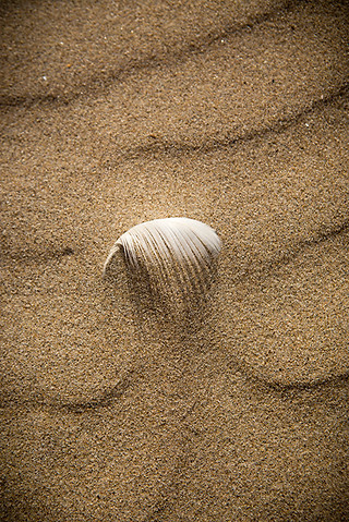 formby feather