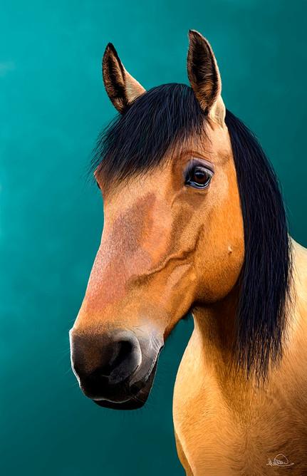 Tilley - horse.jpg