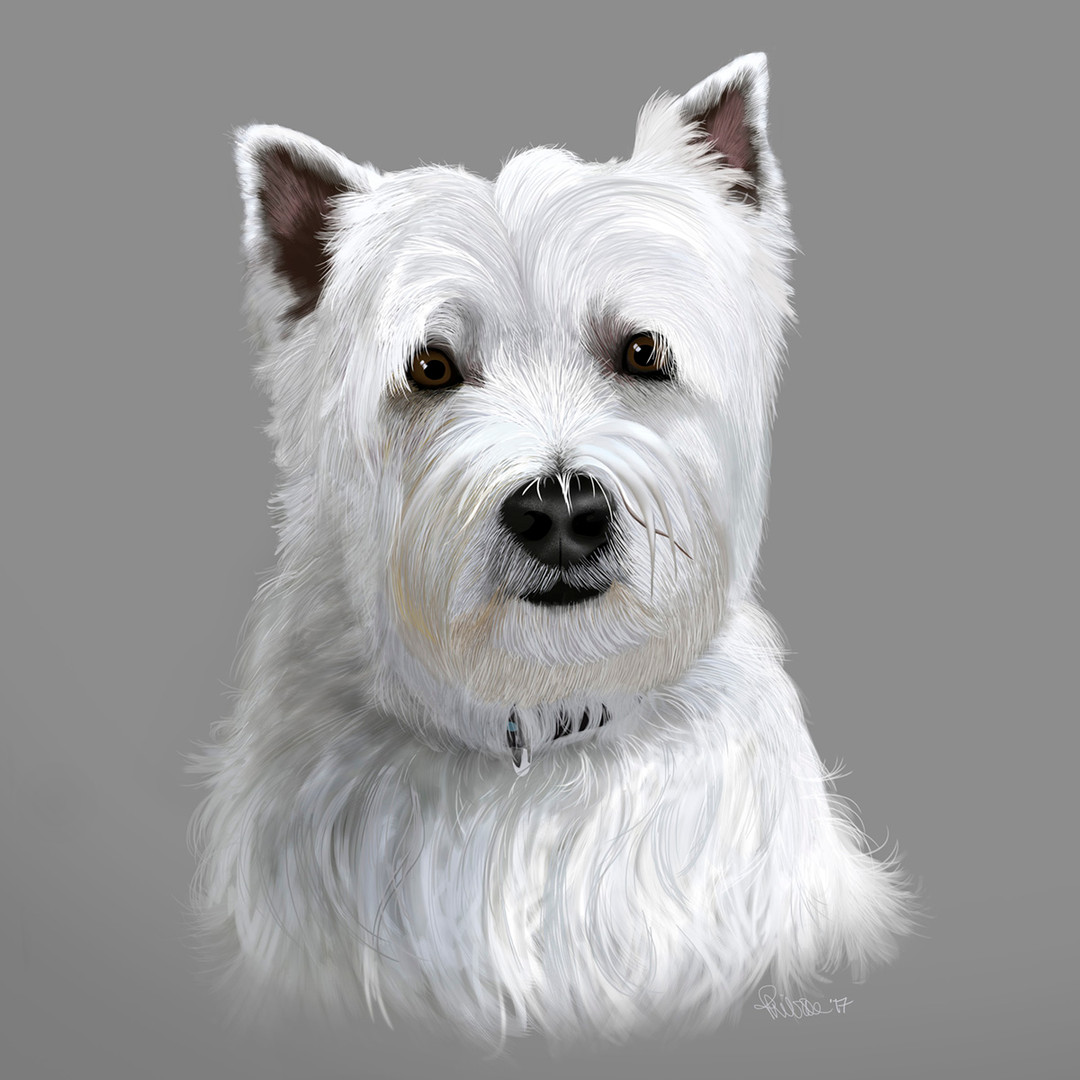 West highland Terrier Portrait
