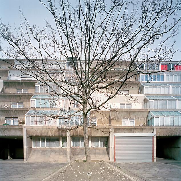 residential tree