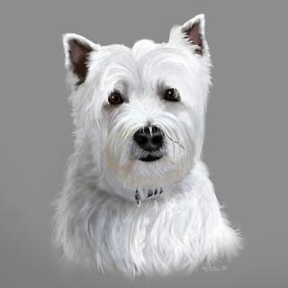 West highland Terrier Portrait.jpg